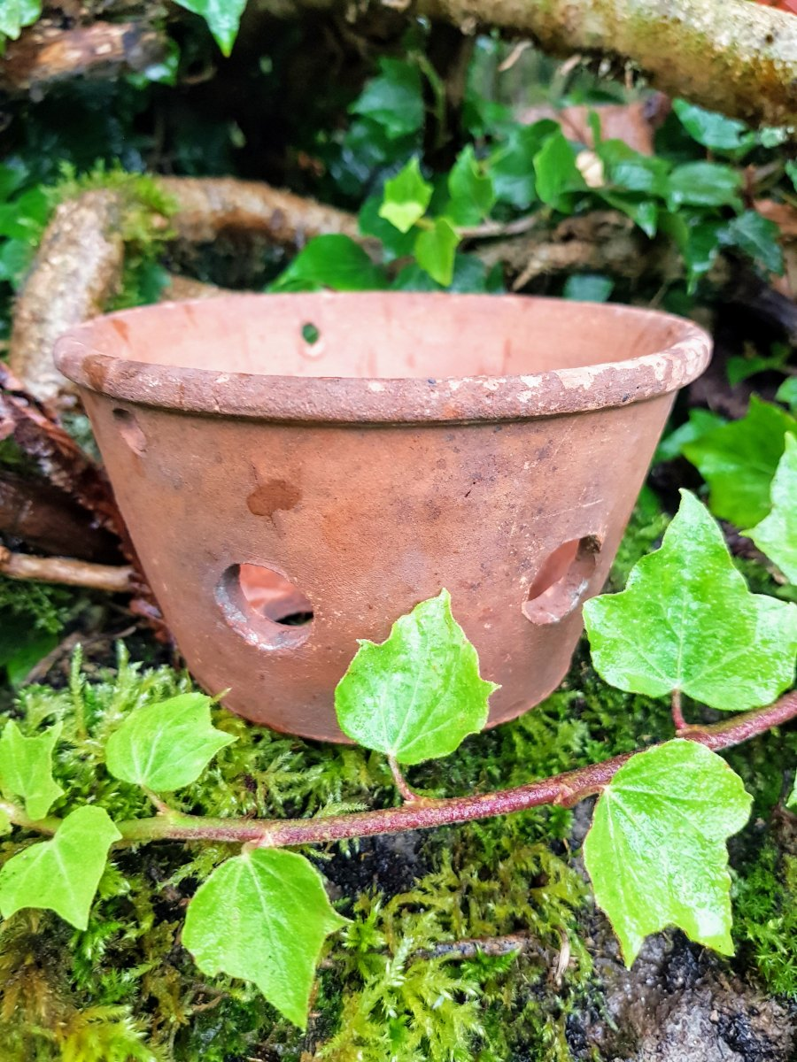 Terracotta Orchid Pot